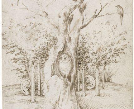 Ich will sehen, schweigen und hören – Hommage an den Hambacher Forst